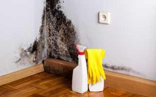 Черная плесень в ванной — как избавиться?